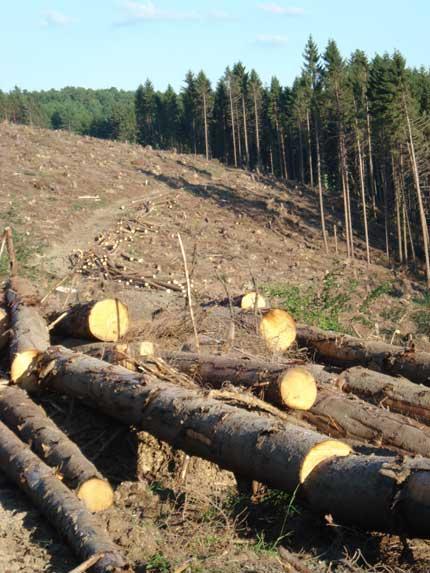 Waldbesuch im Sommer nach Kyrill