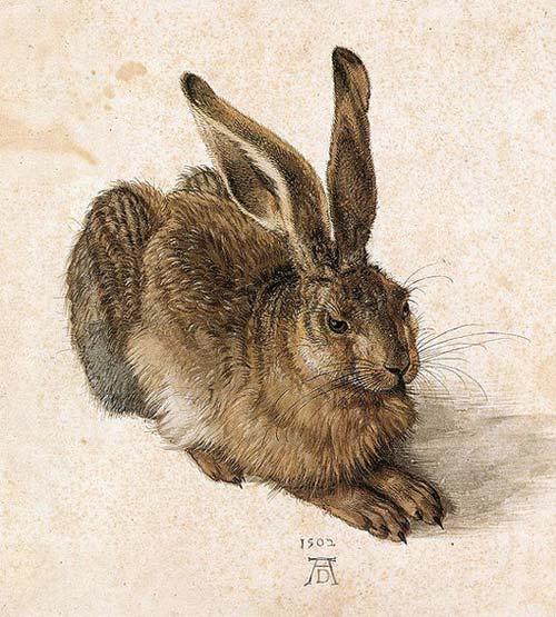 Albrecht Dürers Aquarell Der Feldhase von 1505