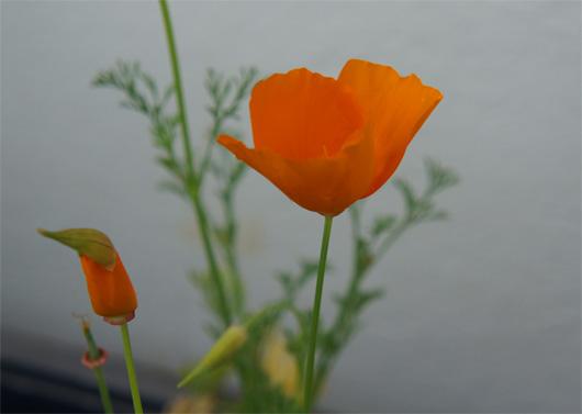 Beate Metz Blumen