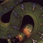 Schlange als Symbol für Verwandlung
